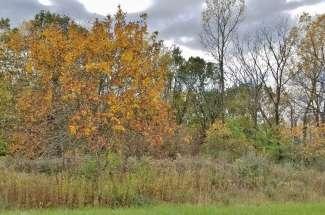 7239 Oak Run Drive